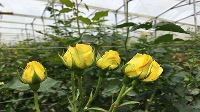 Pagina flores zipa 2